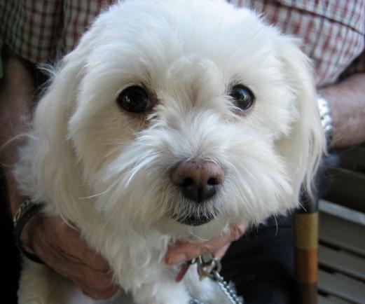 Sgniezka Puppy Love