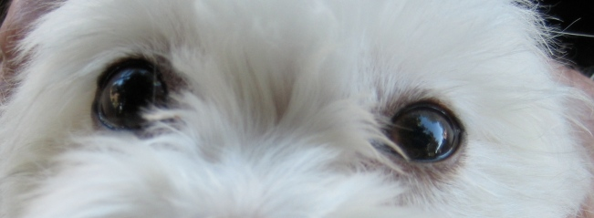 Sgniezka's Eyes